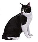 Katten - kanske ditt husdjur